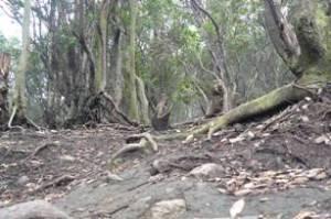 Pepohonan yang turus. Membawa kesan mencekam.